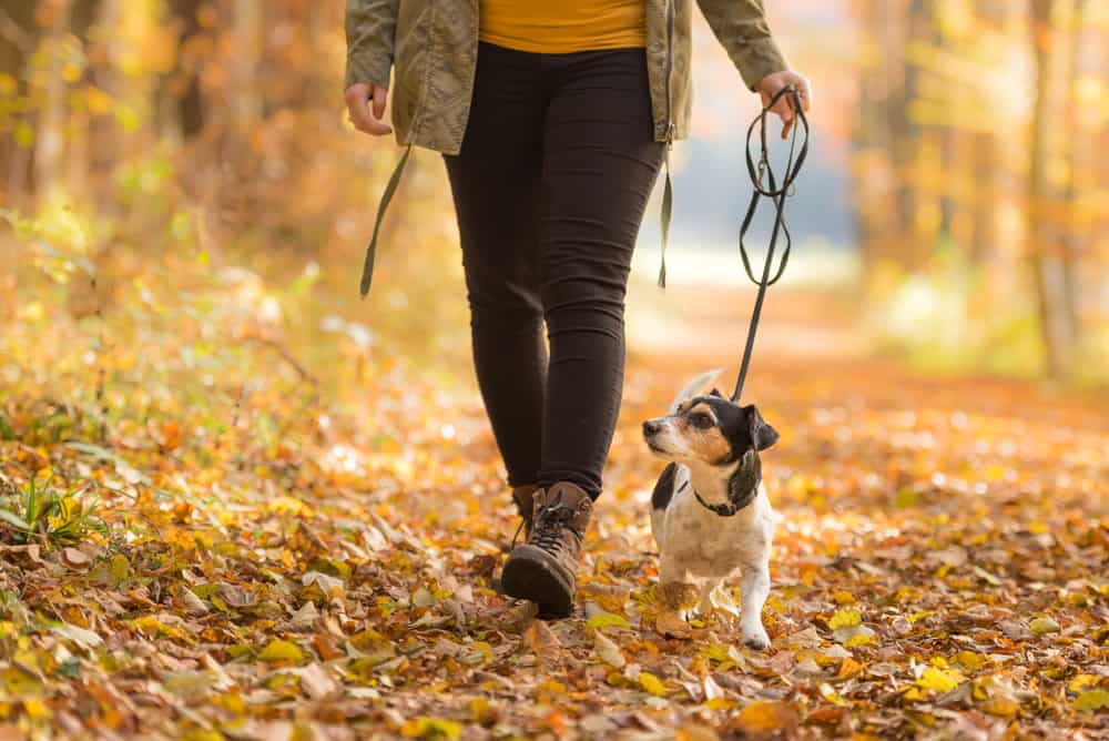 Person walking a dog through a park during Fall.