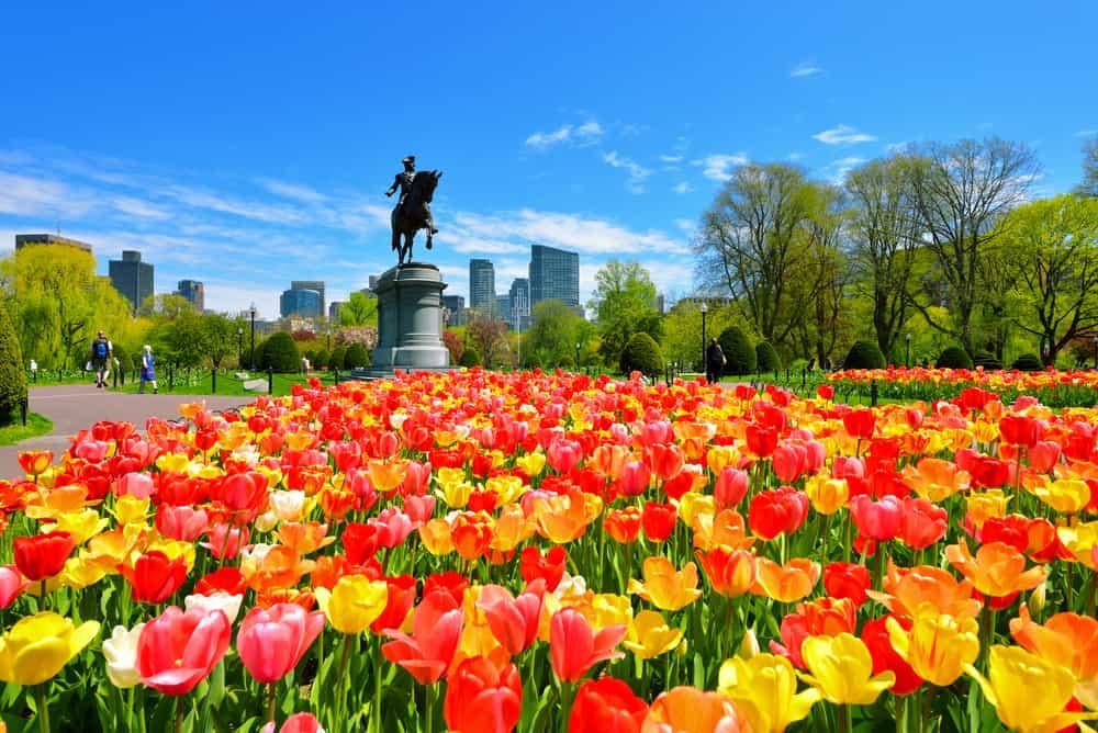 Flowers in the Boston Public Garen at Boston Common