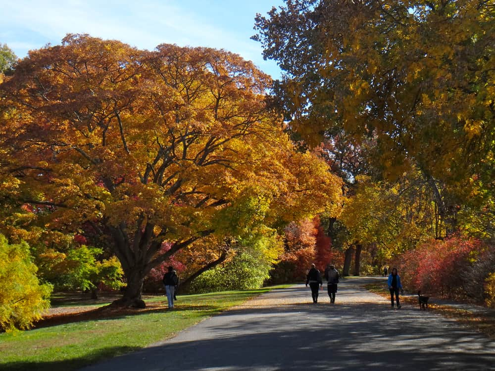 jamaica plain in boston for fall