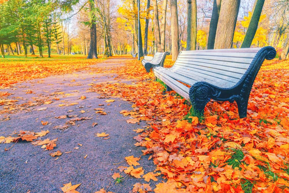 Fall leaves surrounding a Boston park bench